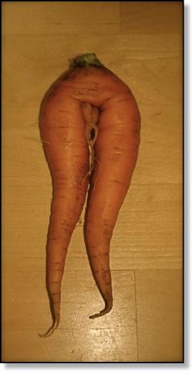 carrotlegs